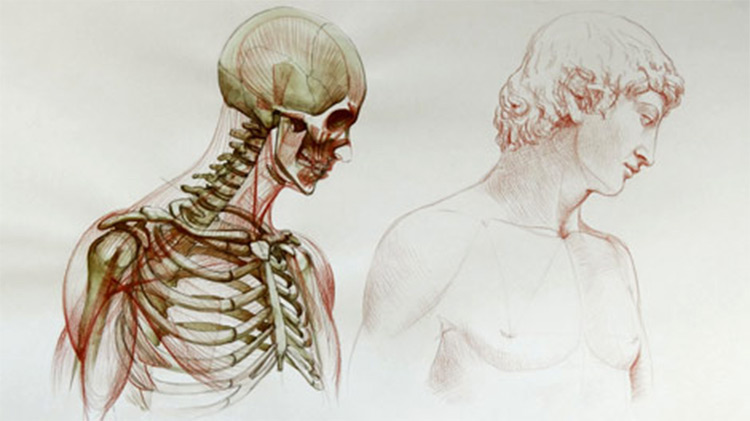 Anatomy Courses For Artists Best Online Courses To Study Human
