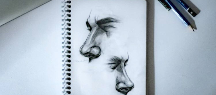 Detailed human noses - anatomy study