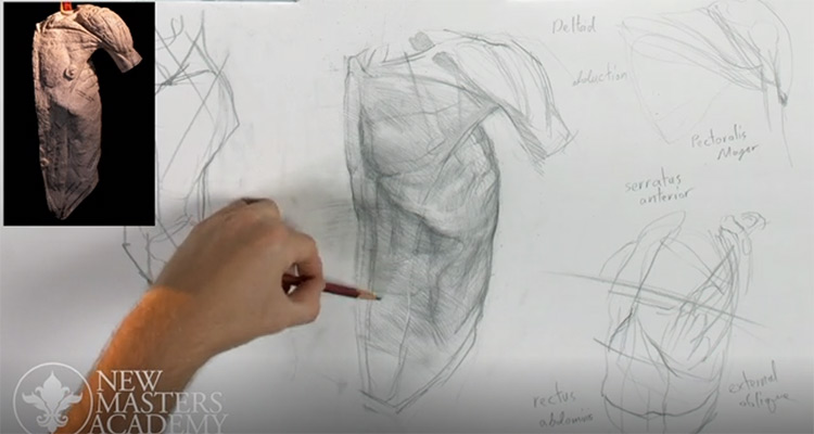 NMA human anatomy preview video