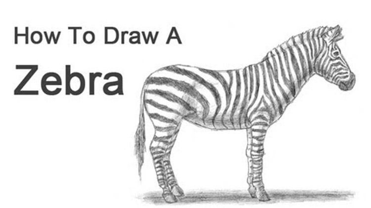How To Draw Animals 50 Free Tutorial Videos To Help You