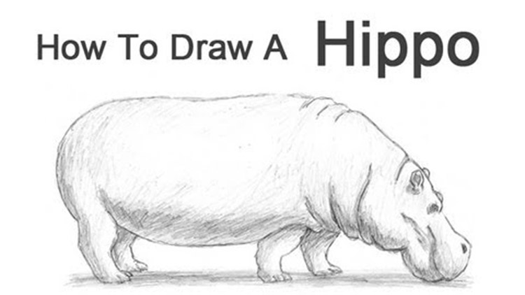 How To Draw Animals: 50 Free Tutorial Videos To Help You