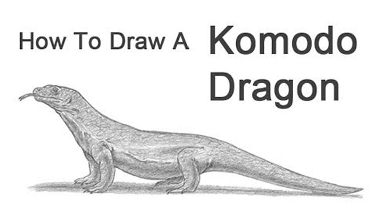 How To Draw Animals 50 Free Tutorial Videos To Help You Learn Step