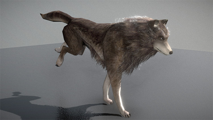 Rigged and modeled wolf running