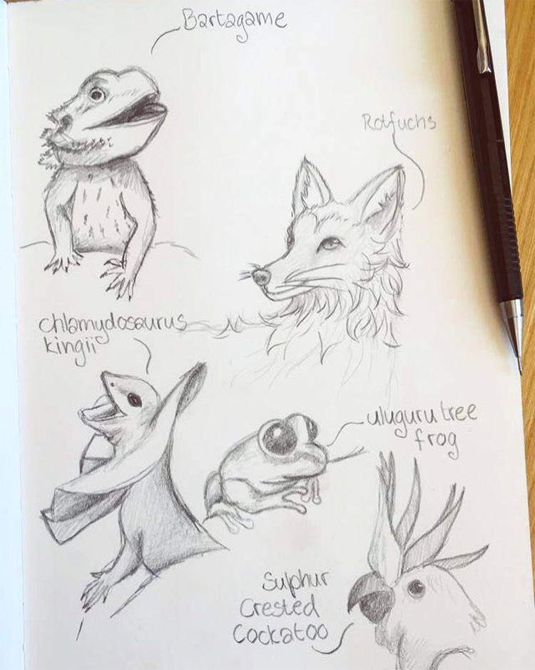 Animal drawings and sketches