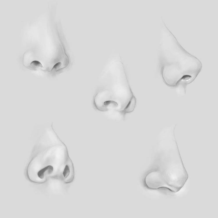 White nose drawings on grey paper