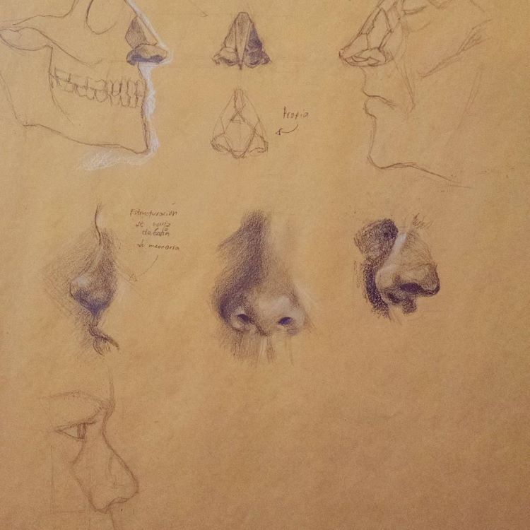Detailed realist drawings of noses