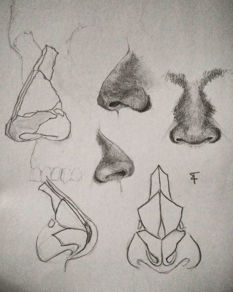 Detailed noses quick sketches
