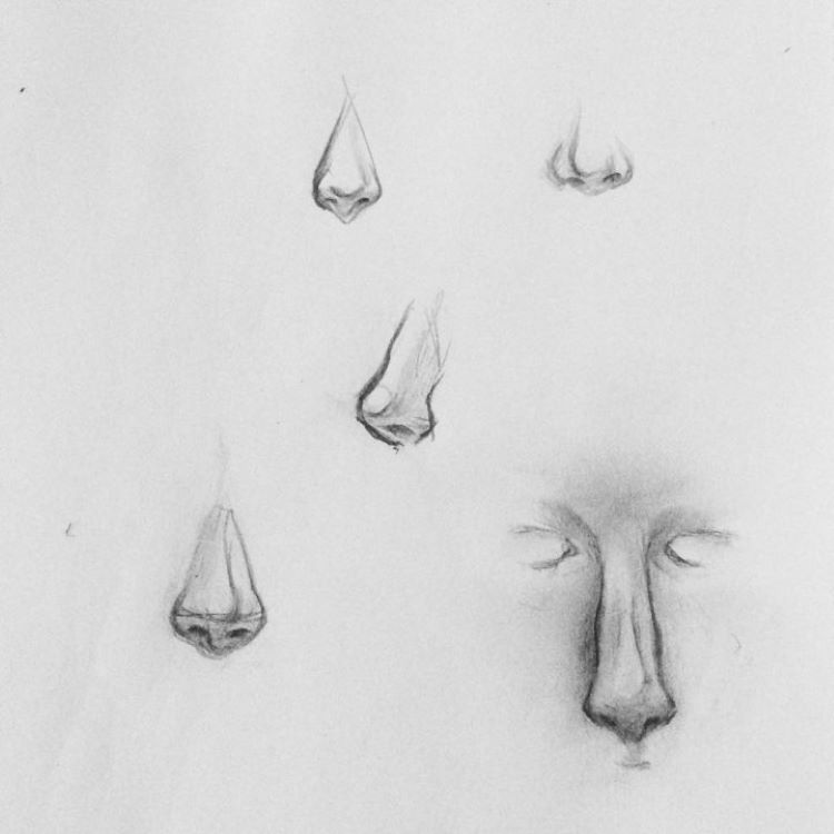 Drawings of noses quick