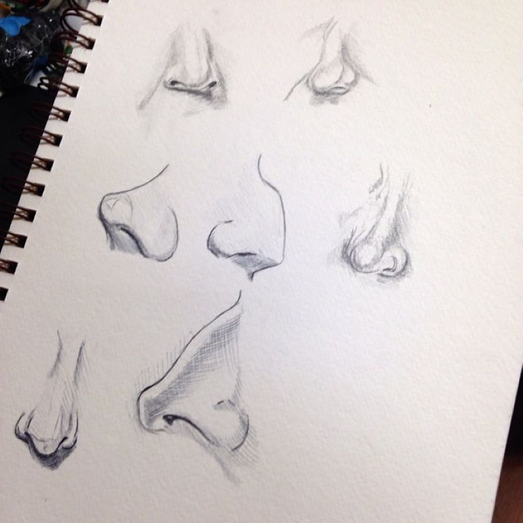Detailed nose drawings with perspective