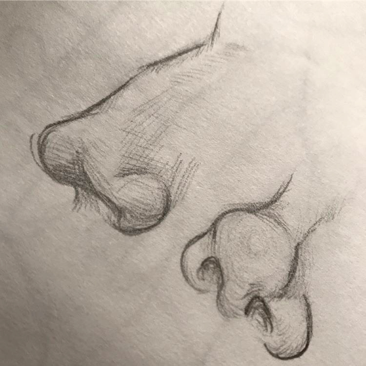 Close-up drawings of noses