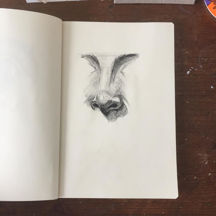 Quick studies for human noses