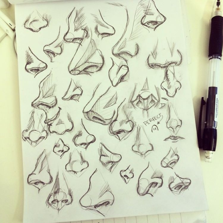 Cool illustrations of noses