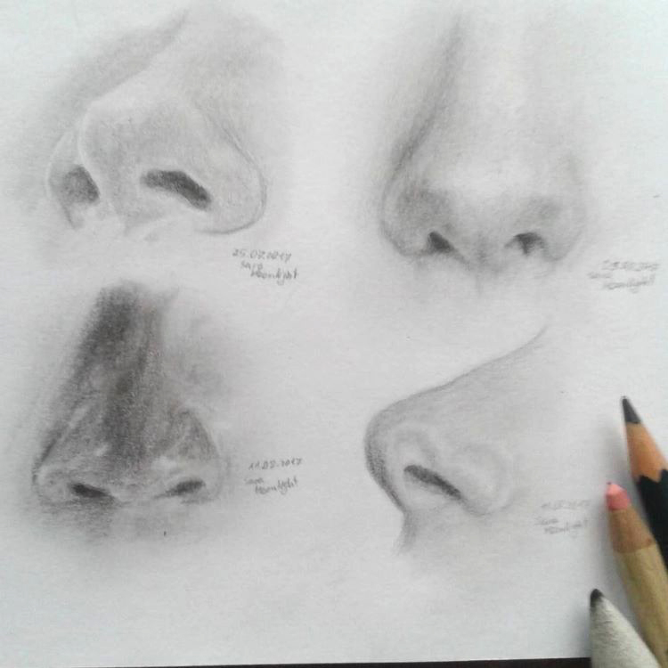 Under side of noses sketched