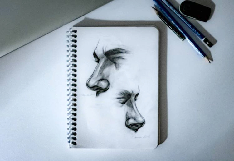Realist drawings of noses and nose bridge