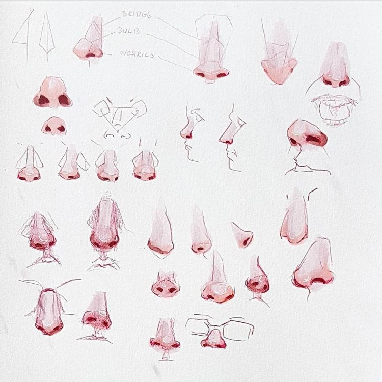 Red pencil drawings of noses