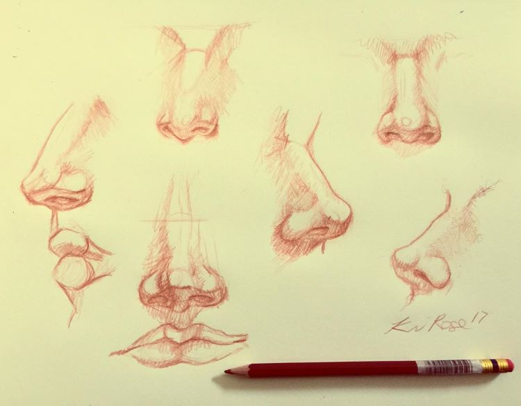 Simple noses and philtrum drawings