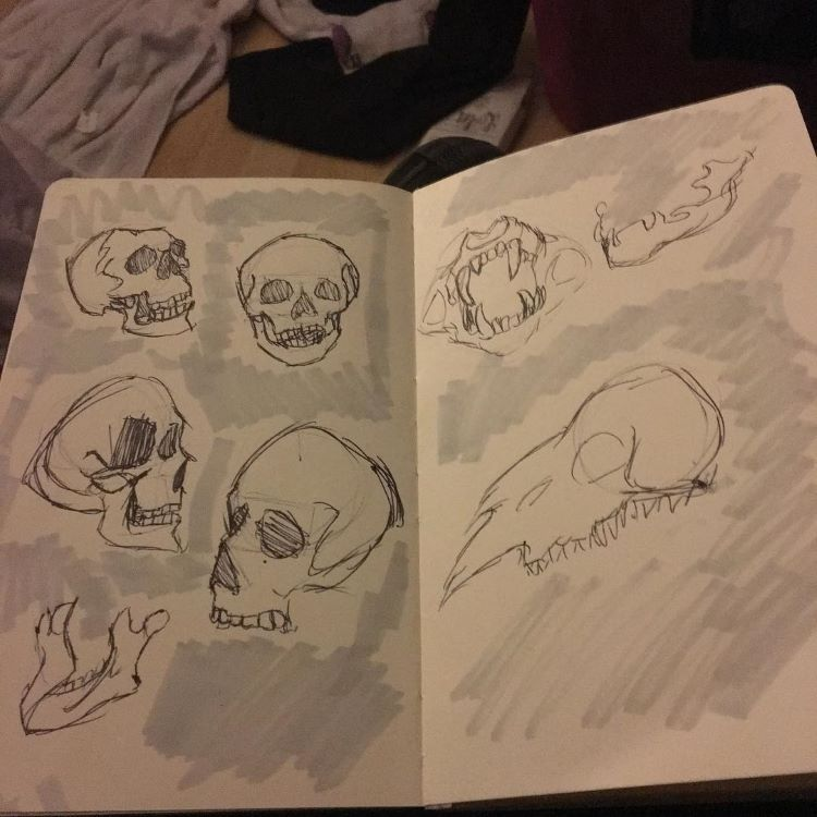 Sketchbook full of skulls
