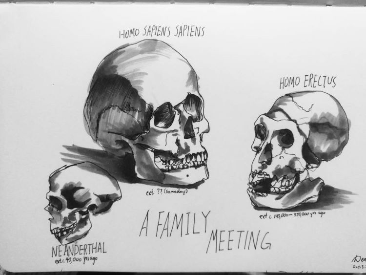 Detailed drawing of human skulls