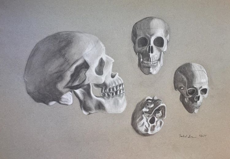 Skull drawings on toned paper