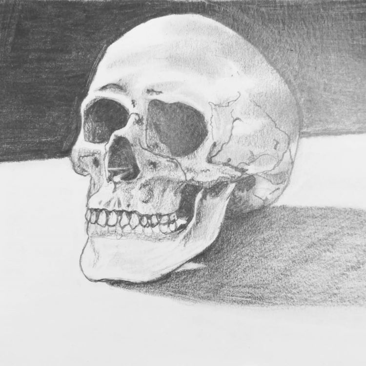 Human skull still life drawing