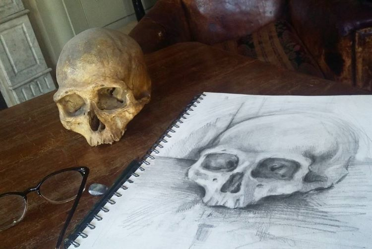 Human skull drawing from life