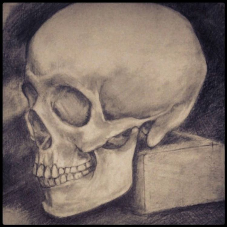 Realistic skull drawing