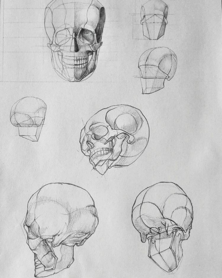 Quick skull sketches