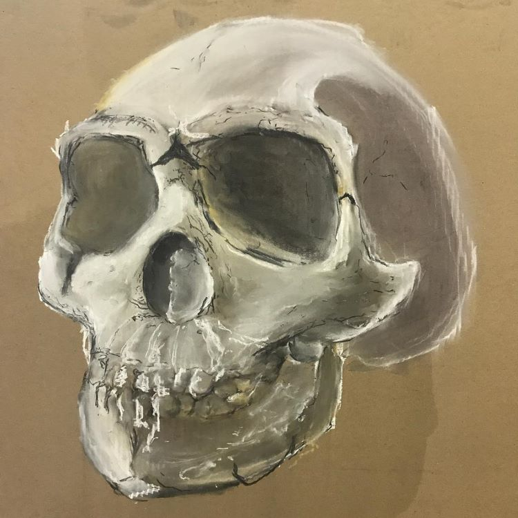 Quick practice of skull drawing