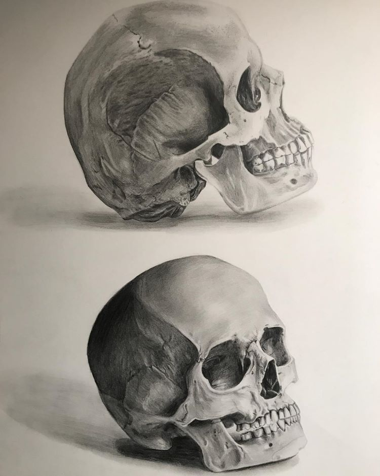 Side and front view of skull drawing