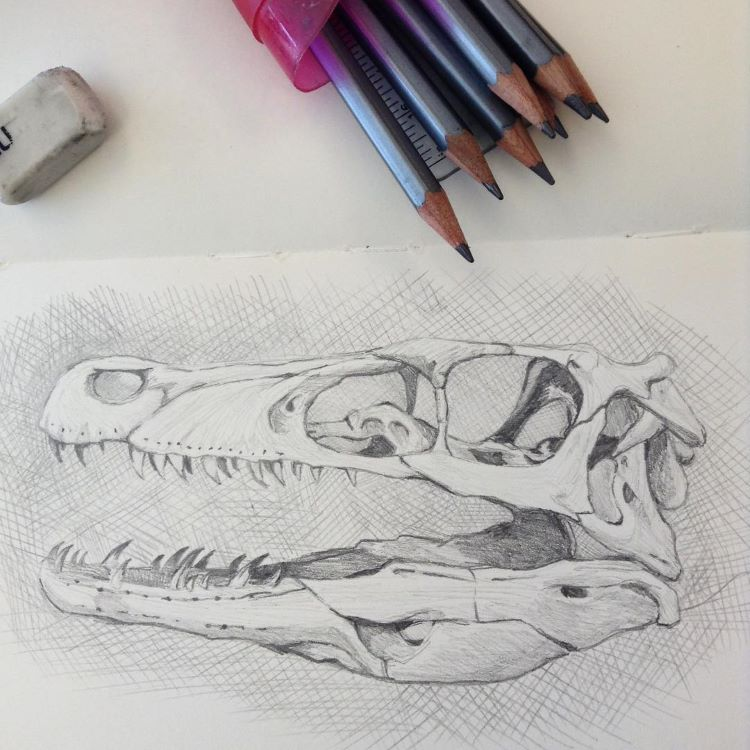 Animal skull drawing in pencil