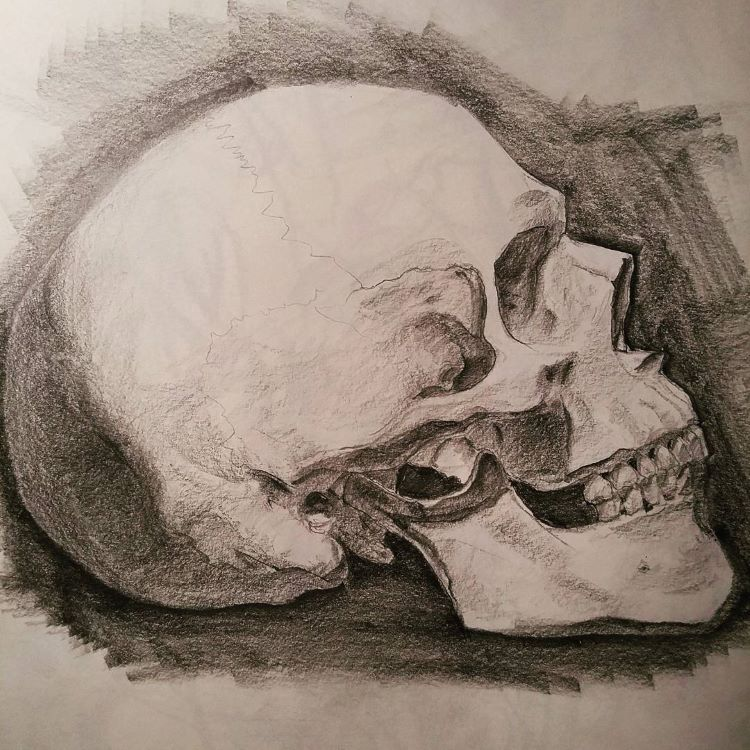 Side view of skull drawing