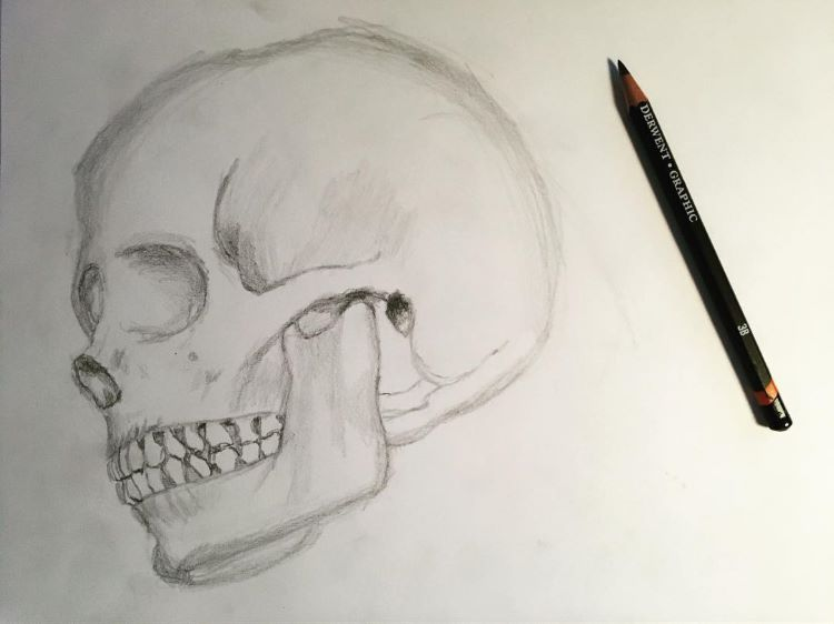 Underside skull drawing