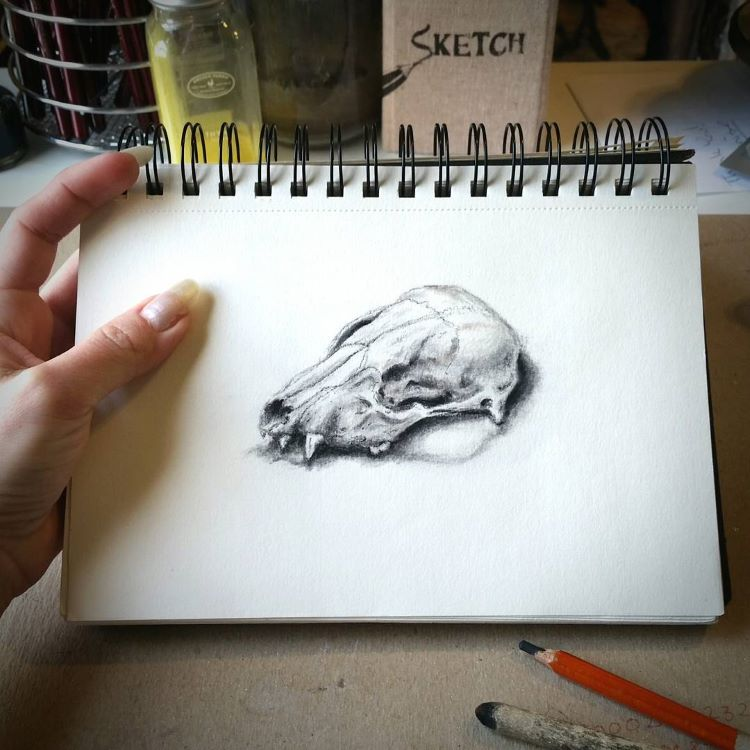 Animal skull drawing in sketchbook